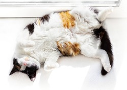 Funny white cat top view lying on back on windowsill indoors.