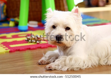 funny white dog in the room