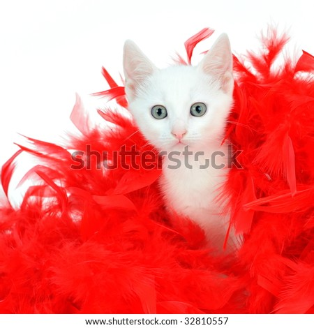 funny white kitten between red feathers