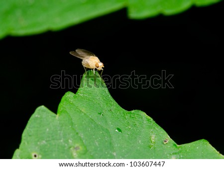 funny yellow fly