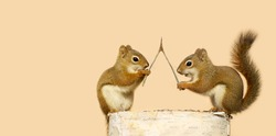 Funny young squirrels on a log with a wishbone, making wishes. Part of a fun series.