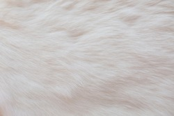 Fur luxurious background of white warm fluffy rabbit with idealistic structure of hairs for boho, aesthetic and perfect design