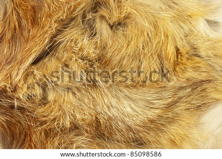 Fur of a fox as a background