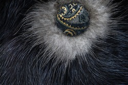 Fur of a wild beast. Feminine decoration. it is a thick hairline covering the skin of many animals.