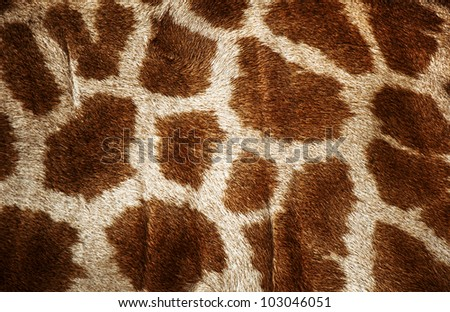 Fur of giraffe useful for background