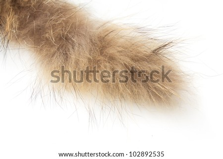 fur on white background