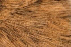 Fur red fox, long nap. Texture, background
