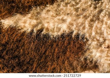 fur skin - real genuine animal brown hair closeup background