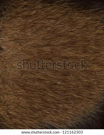 Fur texture. Beaver. - stock photo