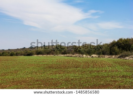 Furrows row pattern in a plowed field prepared for planting crops in spring. Growing wheat crop in springtime. Horizontal view in perspective with cloud and blue sky background #1485856580