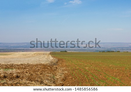 Furrows row pattern in a plowed field prepared for planting crops in spring. Growing wheat crop in springtime. Horizontal view in perspective with cloud and blue sky background #1485856586
