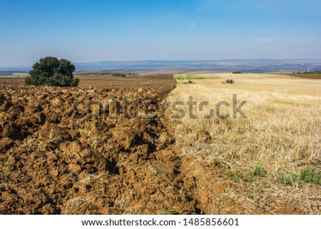 Furrows row pattern in a plowed field prepared for planting crops in spring. Growing wheat crop in springtime. Horizontal view in perspective with cloud and blue sky background #1485856601