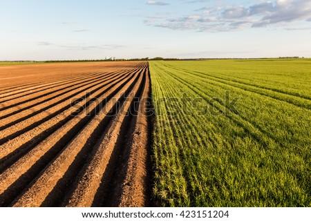 furrows row pattern in a plowed ...