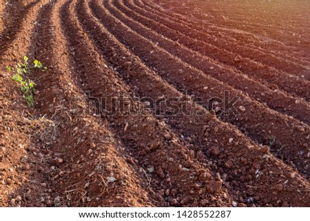 Furrows row pattern in plowed field prepared for planting crops in spring. Horizontal view in perspective Foto stock ©