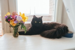 Furry black cat on the window. A fluffy black cat is lying on the windowsill. A black cat sniffs the flowers. Fluffy cat with a bouquet of color.