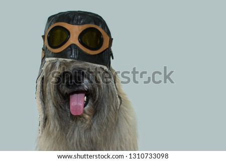 FURRY DOG WEARING AN AVIATOR OR PILOT HAT WITH GOGGLES. ISOLATED ON  BLUE COLORED BACKGROUND. CARNIVAL, HALLOWEEN, IMAGINATION, TRAVELING  OR DREAM CONCEPT. #1310733098