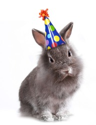 Furry Grey Rabbit With a Birthday Hat On