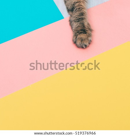 furry paw of a cat lying on colored backgrounds with negative space. minimal.