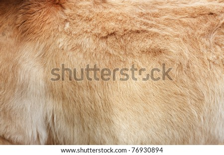Furry skin of brown horse abstract background