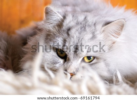 furry white cat with nice look