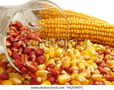 Future for Maize