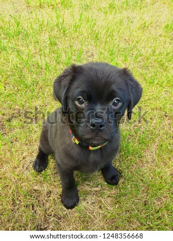 fuzzy black puppy sitting on grass looking at viewer