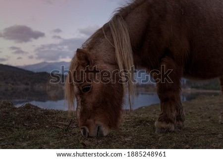 Gököz natürel parktaki sevimli atlar Stok fotoğraf ©