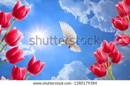 güneşli gökyüzü arka planda kırmızı lale ve güvercin Stok fotoğraf ©