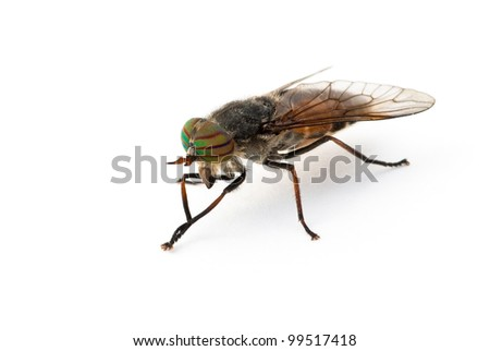 Gadfly against a white background