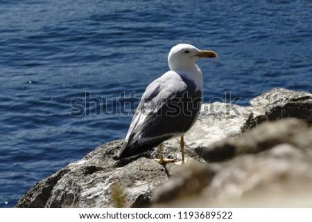 Gaivota olhando o mar Foto stock ©