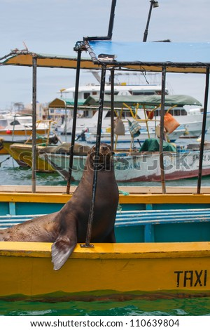 Galapagos sea lion resting on a taxi boat