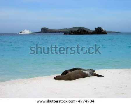 Galapagos Sea Lions and Ship - stock photo