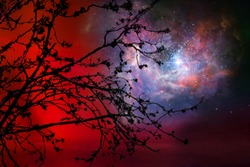 Galaxy on night red sky back silhouette dry tree, Elements of this image furnished by NASA