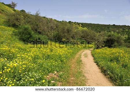 Galilee spring landscape.