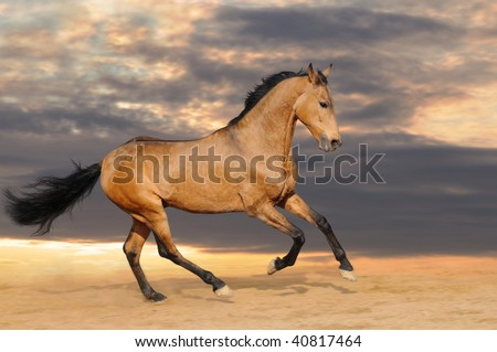 Galloping bay horse