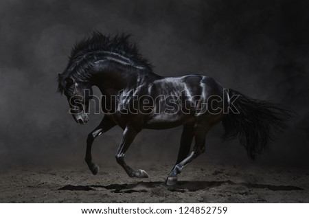 Galloping black horse on dark background.