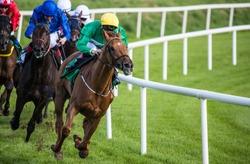 Galloping race horses and jockeys racing towards the finish line