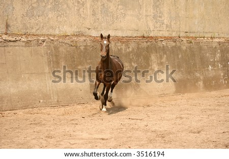 Gallopping brown horse