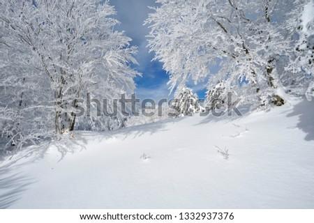 Gambarie, Reggio Calabria district, Calabria, Italy, Europe,  Mount Scirocco landscape 1660 mt #1332937376
