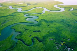 Gambia Mangroves. Aerial view of mangrove forest in Gambia. Photo made by drone from above. Africa Natural Landscape.