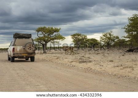 Game drive in Etosha National Park, Namibia