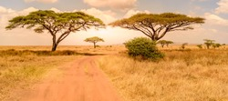 Game drive on dirt road with Safari car in Serengeti National Park in beautiful landscape scenery, Tanzania, Africa