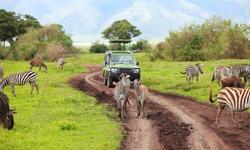 Game drive. Safari car on game drive with animals around, Ngorongoro crater in Tanzania.