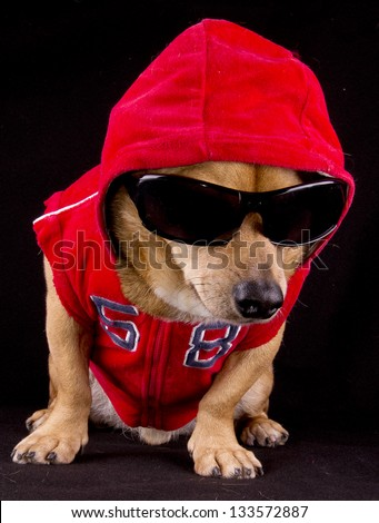 gangsta rapper dog