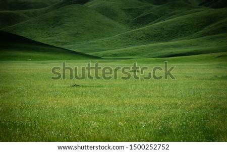 Ganjia grasslands in Gannan autonomous prefecture near Xiahe, Gansu, China. endless alpine pasture. rolling hills wallpaper.  #1500252752