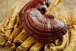Ganoderma Lucidum Mushroom with  Ginseng on a wooden table.natural medicine.