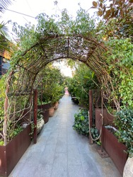 Garden archway greenery with pathway