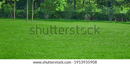 Garden Backyard Park Shady Fresh Lawn Green Wide Background Or Texture. Panoramic View. Abstract Meadow Banner. Lawn Made From Turf Or Sod. Focus Selective. Сток-фото ©