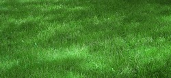 Garden Backyard Park Shady Fresh Lawn Green Wide Background Or Texture. Picnic Family Place Green Area. Meadow Banner. Lawn Made From Turf Or Sod. Focus Selective.