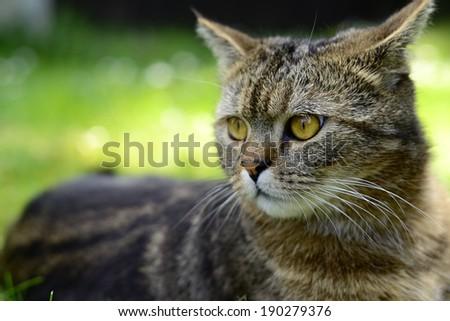 Garden cat #190279376